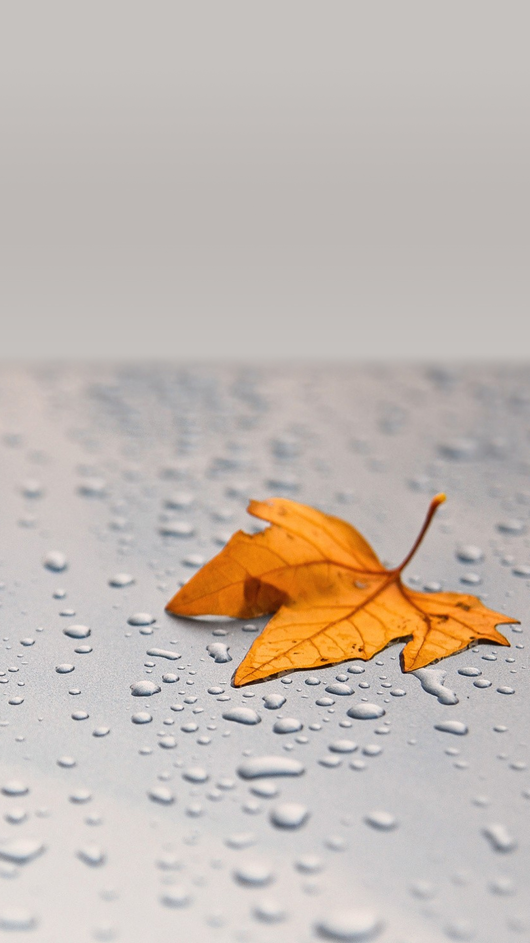 Wet Leaf Smartphone HD Wallpapers