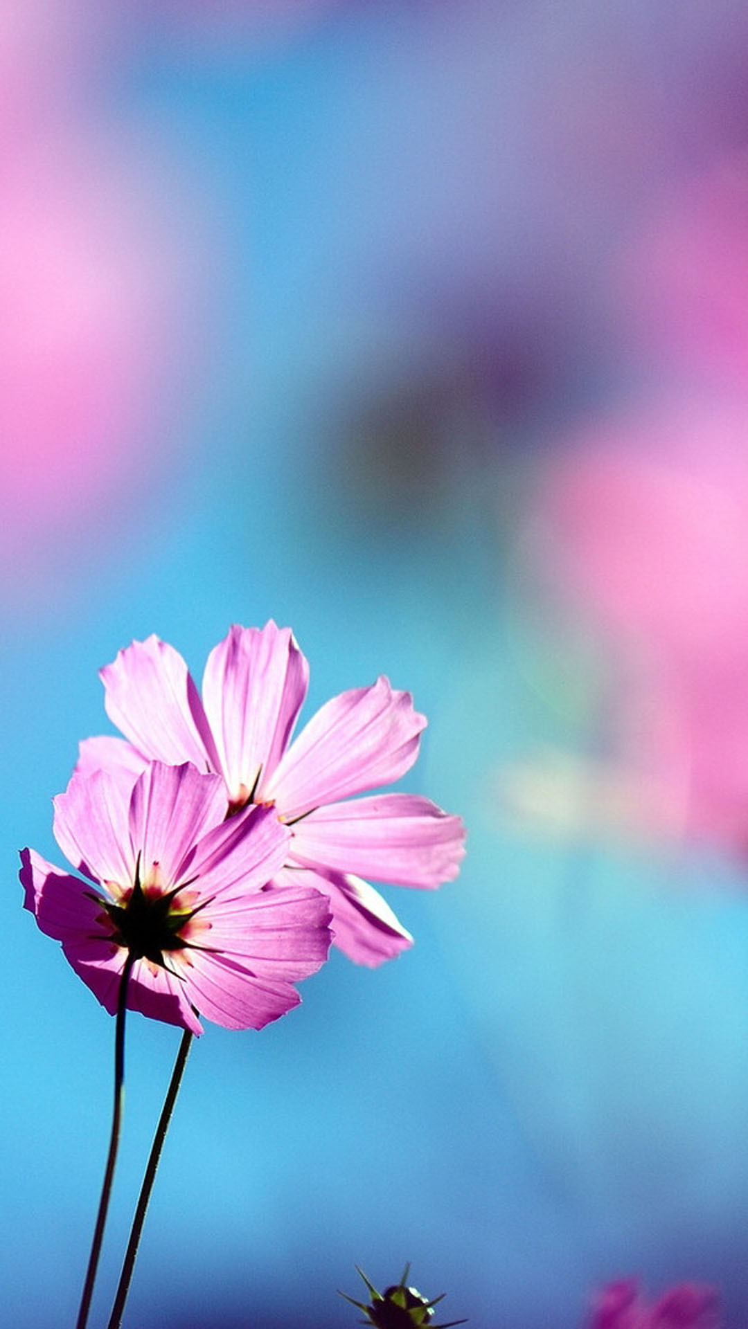 Beautiful Flowers DOF Smartphone Wallpapers